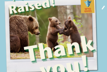 Alliance reaches WyoGives fundraising goal to support conservation leaders!